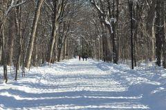 Les piétons avant les skieurs au Bois de Coulonge