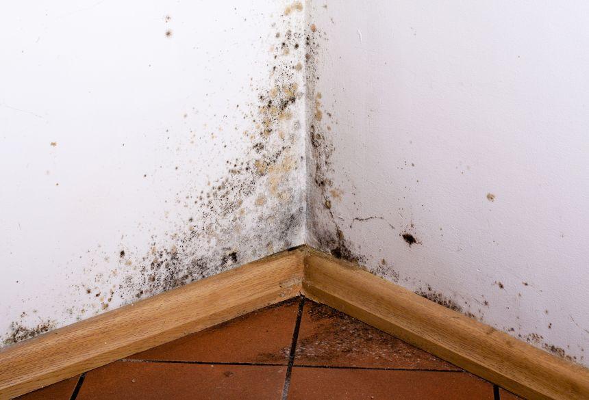 Meilleur encadrement pour la décontamination des moisissures