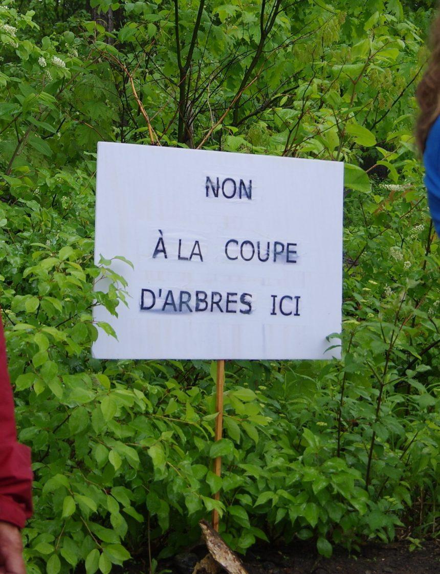 Boisé de Rochebelle : les étudiants répliquent