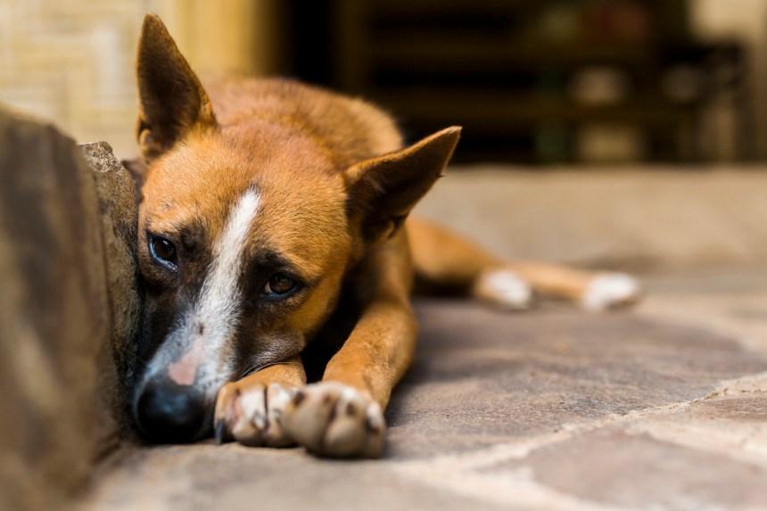 Déménagement: n'abandonnez pas vos animaux