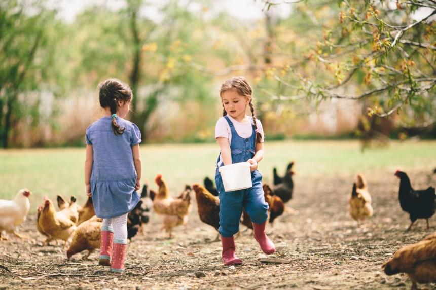 Rapprocher les jeunes de l'agriculture