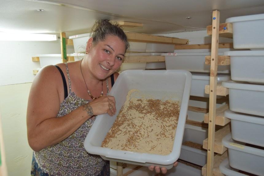 L'entomoculture en plein développement