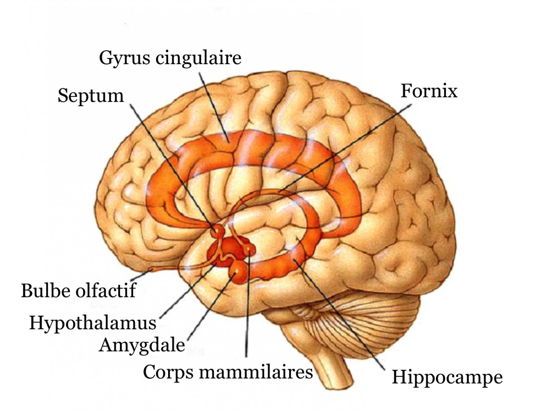 programmes hippocampe