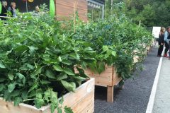 Un jardin collectif pour le quartier Duberger-Les Saules