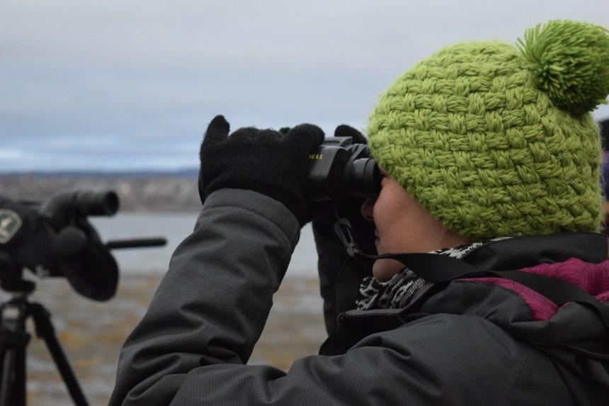 Visite guidée gratuite: observation des oiseaux migrateurs à l'Ile d'Orléans