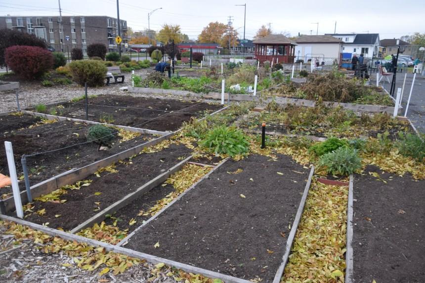 Fermeture saisonnière du jardin communautaire Croque-Soleil