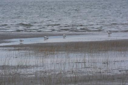Inventaire animalier: la Baie de Beauport est l'hôtesse d'un troisième bioblitz