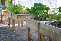 Une future ferme urbaine sur la place du Marché du Vieux-Port