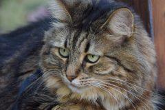 Sécurité accrue pour le personnel aux cliniques vétérinaires