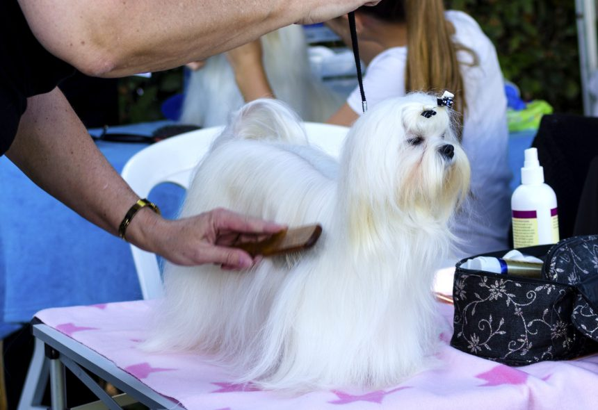 Fleur de Lys centre commercial reporte le Salon Info-canin