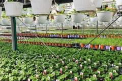Covid-19: soulagement pour les pépinières et les centres jardin