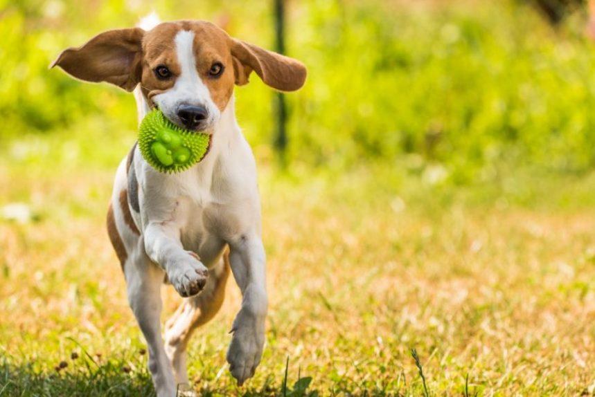 Problèmes au parc à chiens de Château-Richer