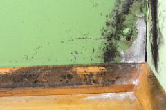 Première norme pour la lutte aux moisissures