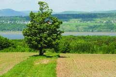 Propriétaires de milieux naturels recherchés