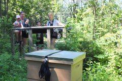 Contrat estival pour 30 000 abeilles