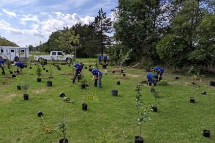La communauté répond à l'appel: près de 1 000 arbres plantés à Québec grâce à l'effort collectif