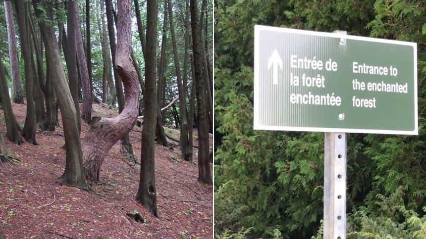 Visitez l'étrange forêt enchantée de Ville-Marie au Témiscamingue