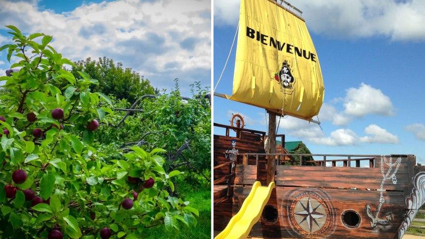 Partez cueillir des pommes en famille dans ce verger à thématique pirate!