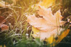 Laissez les feuilles mortes au sol