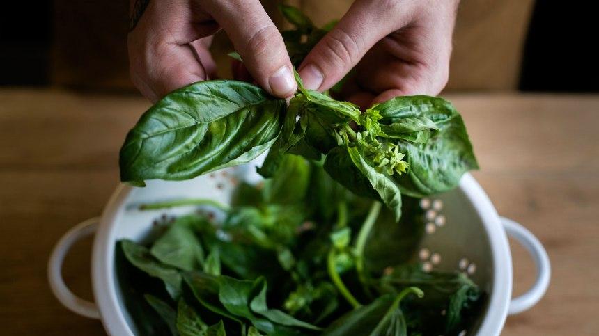 Les meilleurs trucs pour conserver la fraîcheur et la saveur de ses fines herbes