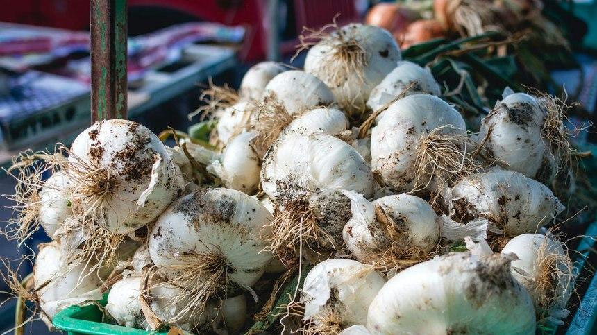 Tout savoir sur la plantation et la récolte de l'ail