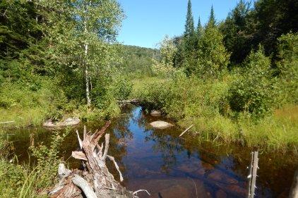 Conservation volontaire des milieux humides