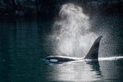 Baleines et requins pour démystifier l'environnement