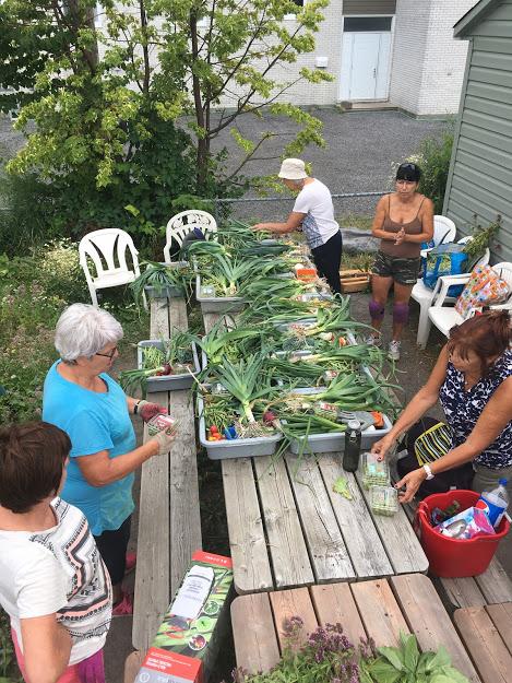 Jardin collectif et récoltes communes