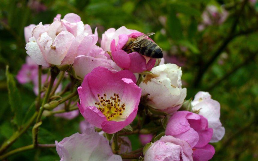 Aider les pollinisateurs avec des fleurs