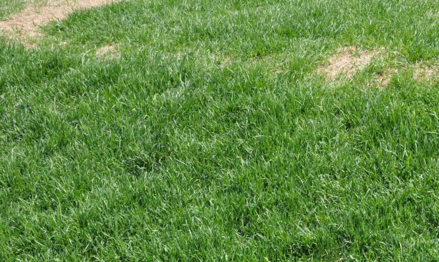 Garder sa pelouse vivante avec des produits verts