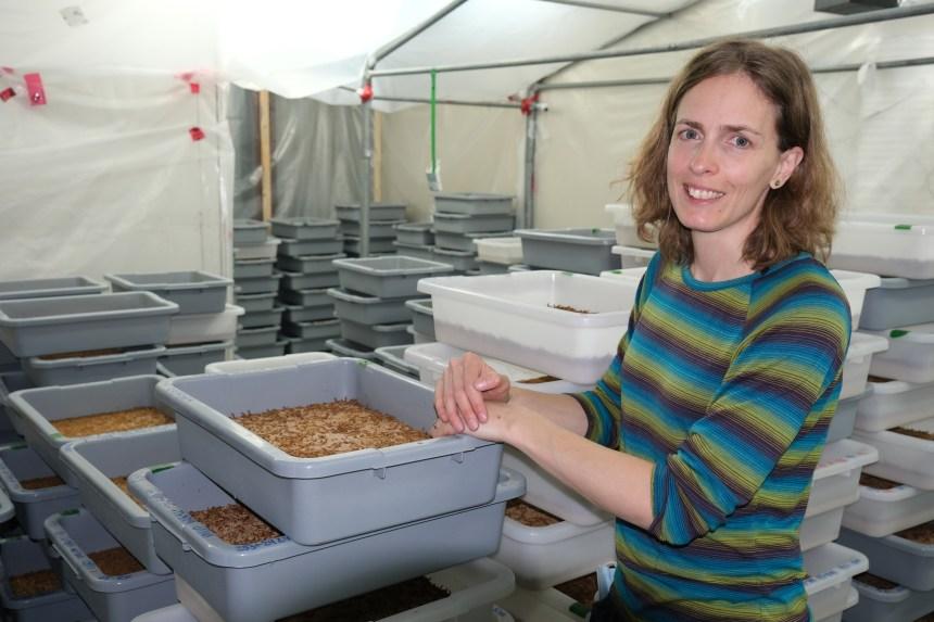 Des vers dans votre assiette: le défi d'Insectes Intrinsekt
