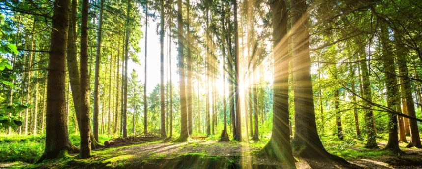 Célébrations du Mois de l'arbre et des forêts