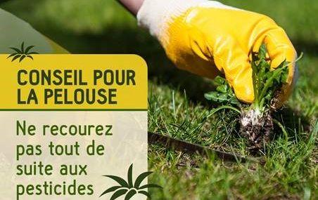 Conseils pour une pelouse saine