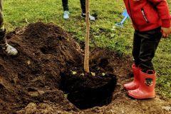 Distribution d'arbres à domicile à L'Ancienne-Lorette