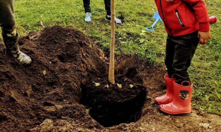 La Ville offre 2 000 arbres gratuitement aux citoyens de Québec