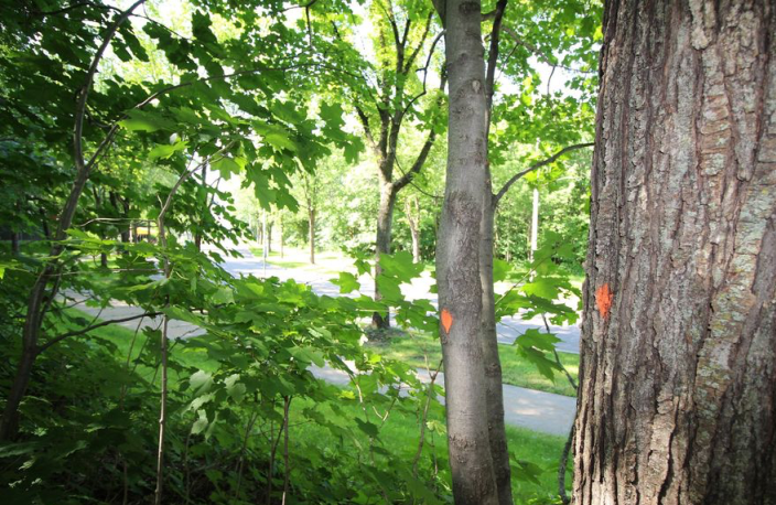 Le tracé du tramway fait craindre pour un boisé du campus universitaire