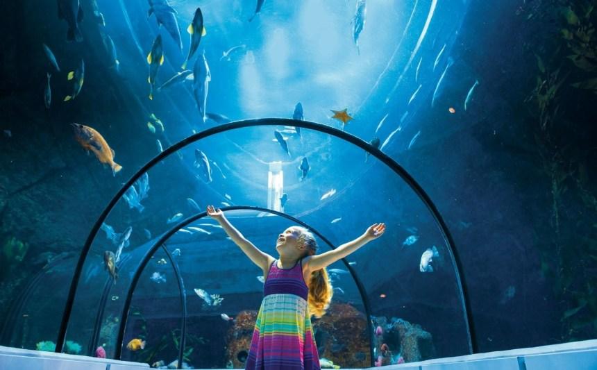 Un mois d'octobre riche en activités scientifiques à l'Aquarium