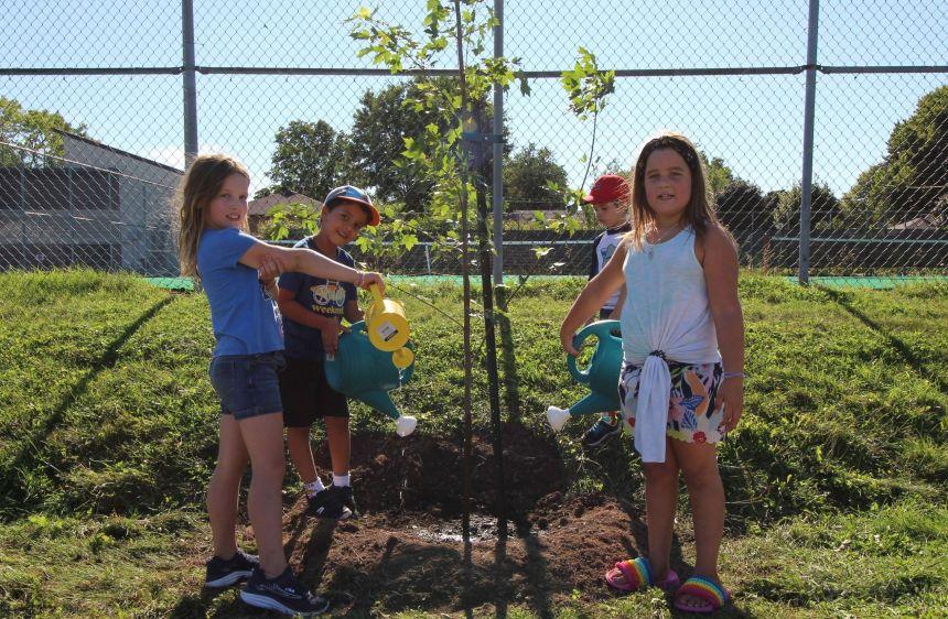 Plantation d'arbres à l'école Saint-Louis-de-France