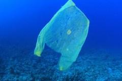 Giornata mondiale dell'Ambiente, lotta alla plastica negli oceani