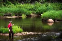 Forêt Montmorency: De la forêt à l'assiette