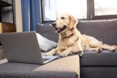 Des internautes retrouvent un chien