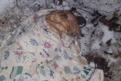Chien battu retrouvé mort: les internautes en colère