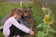 Des jeunes de Vanier partagent leurs récoltes