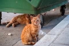 Des organismes se mobilisent pour les chats errants