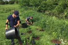 Protection de l'environnement: végétalisation de la rivière Lorette