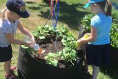 Récolte de légumes et de connaissances
