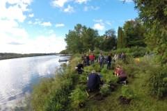 Plantation stratégique dans la bande riveraine du lac Saint-Augustin