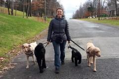 450 morsures de chiens par jour au Québec