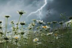 Quand la météo de Québec fracasse des records