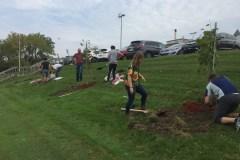 Plus d'arbres pour les établissements de santé